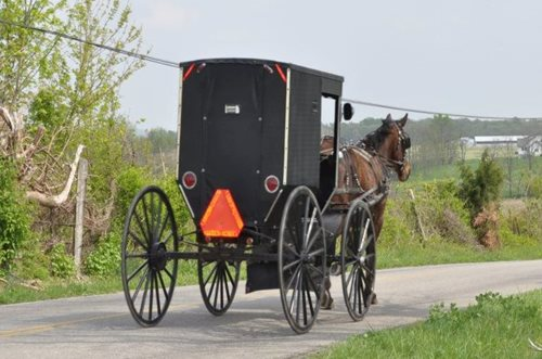 Amish-horse-and-buggy-cropped